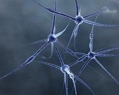 что лечит невролог