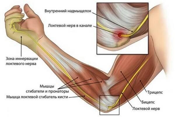 Воспаление сухожилий локтевого сустава симптомы оценка функциональной активности суставов