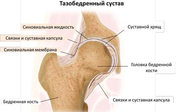 Травмы бедра и тазобедренного сустава у пожилых почему боли в тазо бедренном суставе
