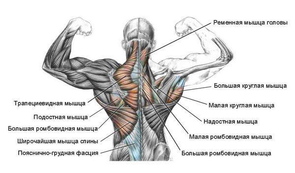 второй слой мышц спины
