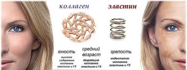 коллаген и организм