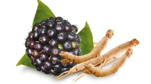плоды и корень элеутерококка