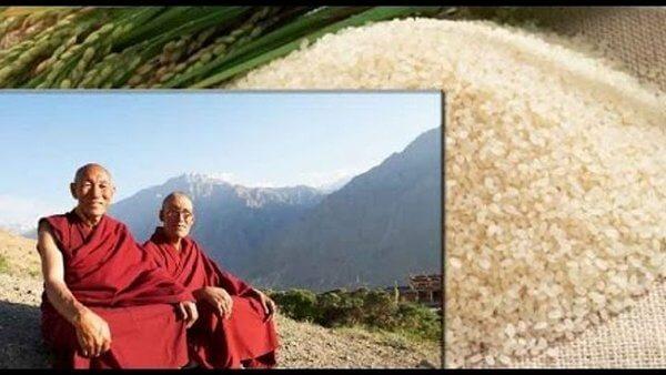 лечебные свойства риса