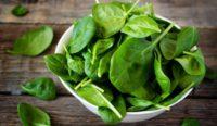 зеленые и свежие листья шпината