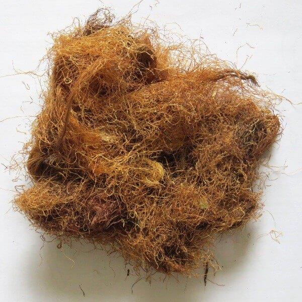 кукурузные рыльца лечебные свойства и противопоказания