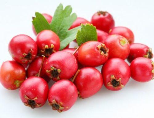 Чем полезны плоды боярышника? И его противопоказания