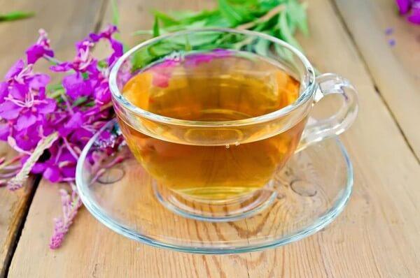 иван чай лечебные свойства и противопоказания